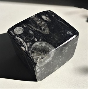 Polished Orthoceras Cube Carving #093019